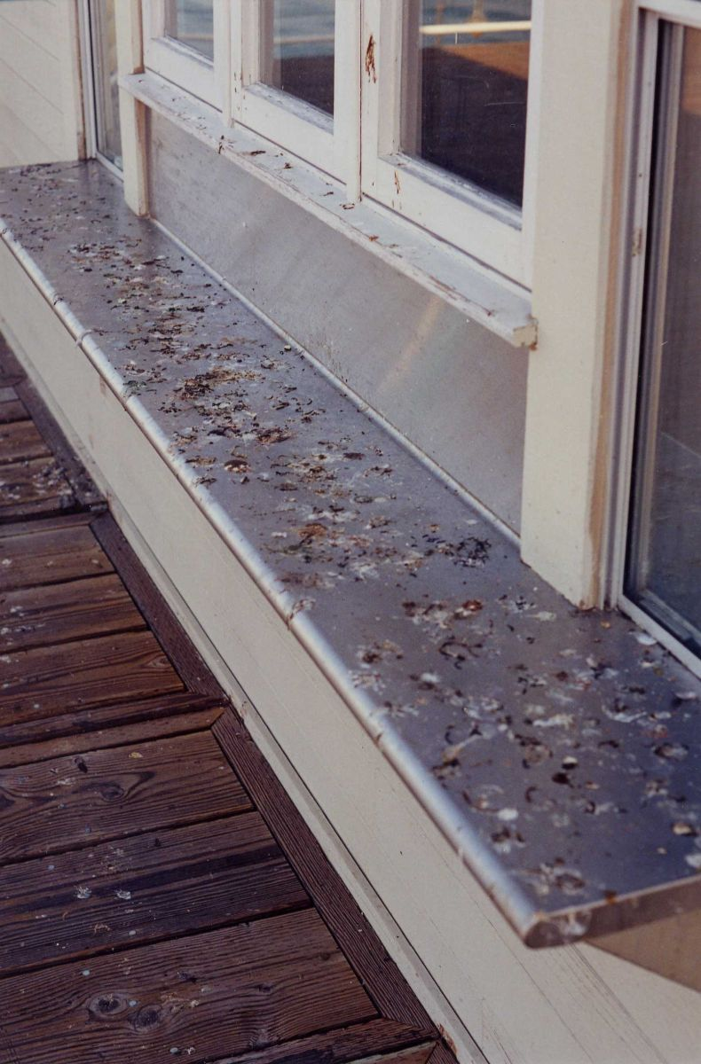 Are Nuisance Birds Attempting A Hostile Takeover of Your Business?  Bird Co...